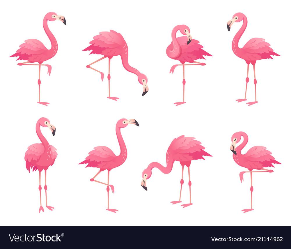 Exotic pink flamingos birds flamingo with rose