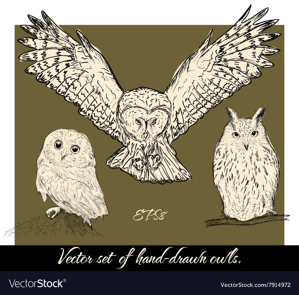 Set of isolated hand-drawn owls 1