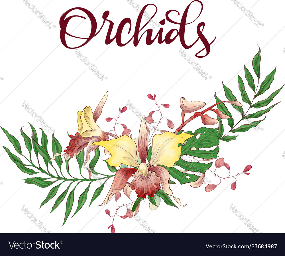 Floral design frame orchid eucalyptus greenery