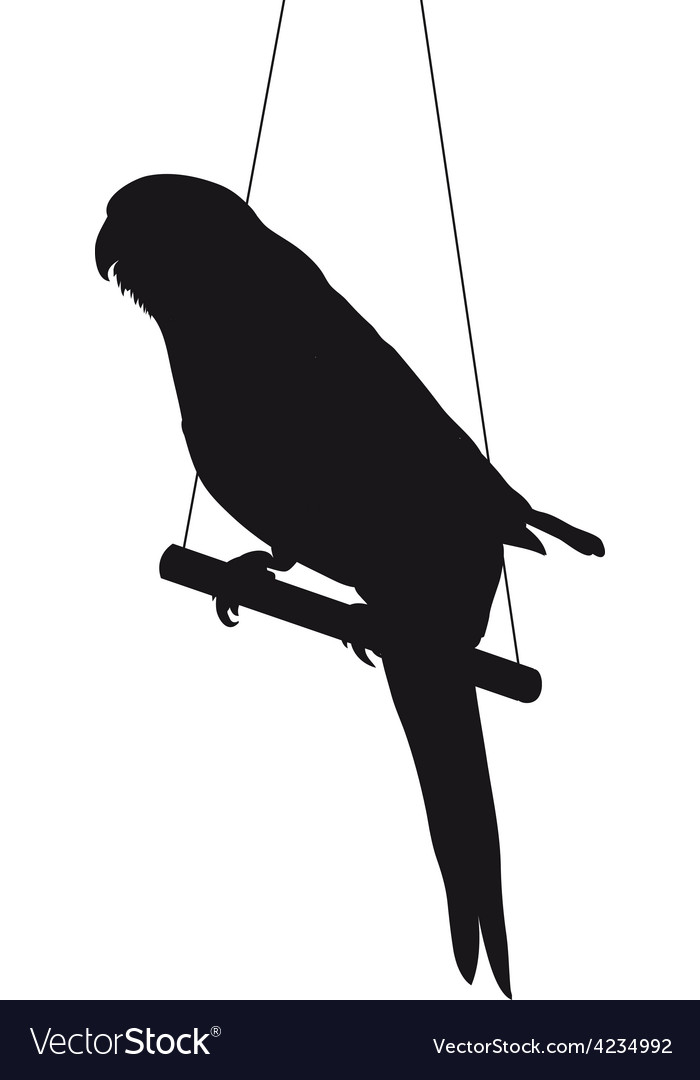 Bird silhouette isolated on white background