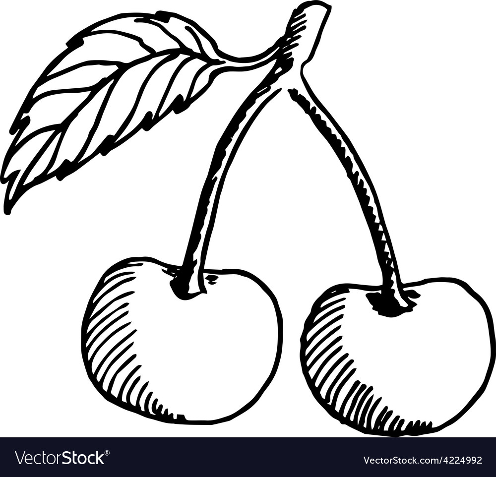Cherry sketch vector image