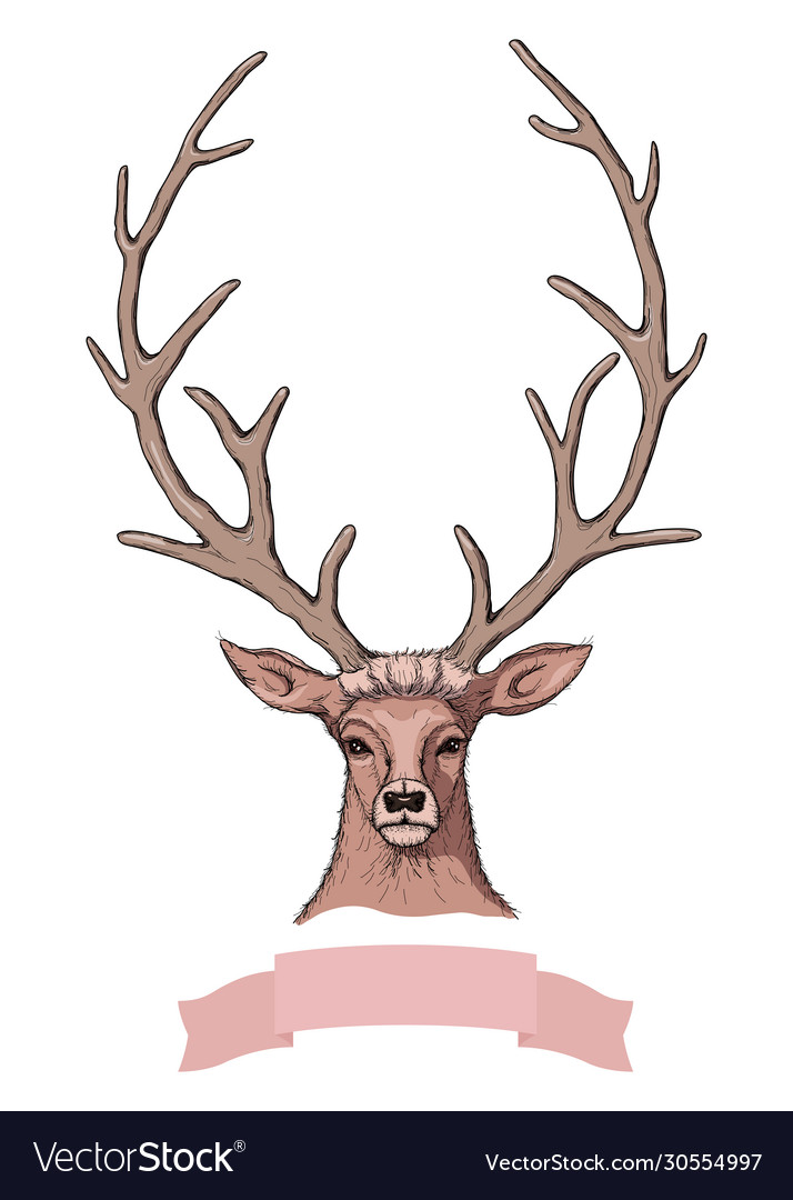 Sketch beautiful deer with ribbon