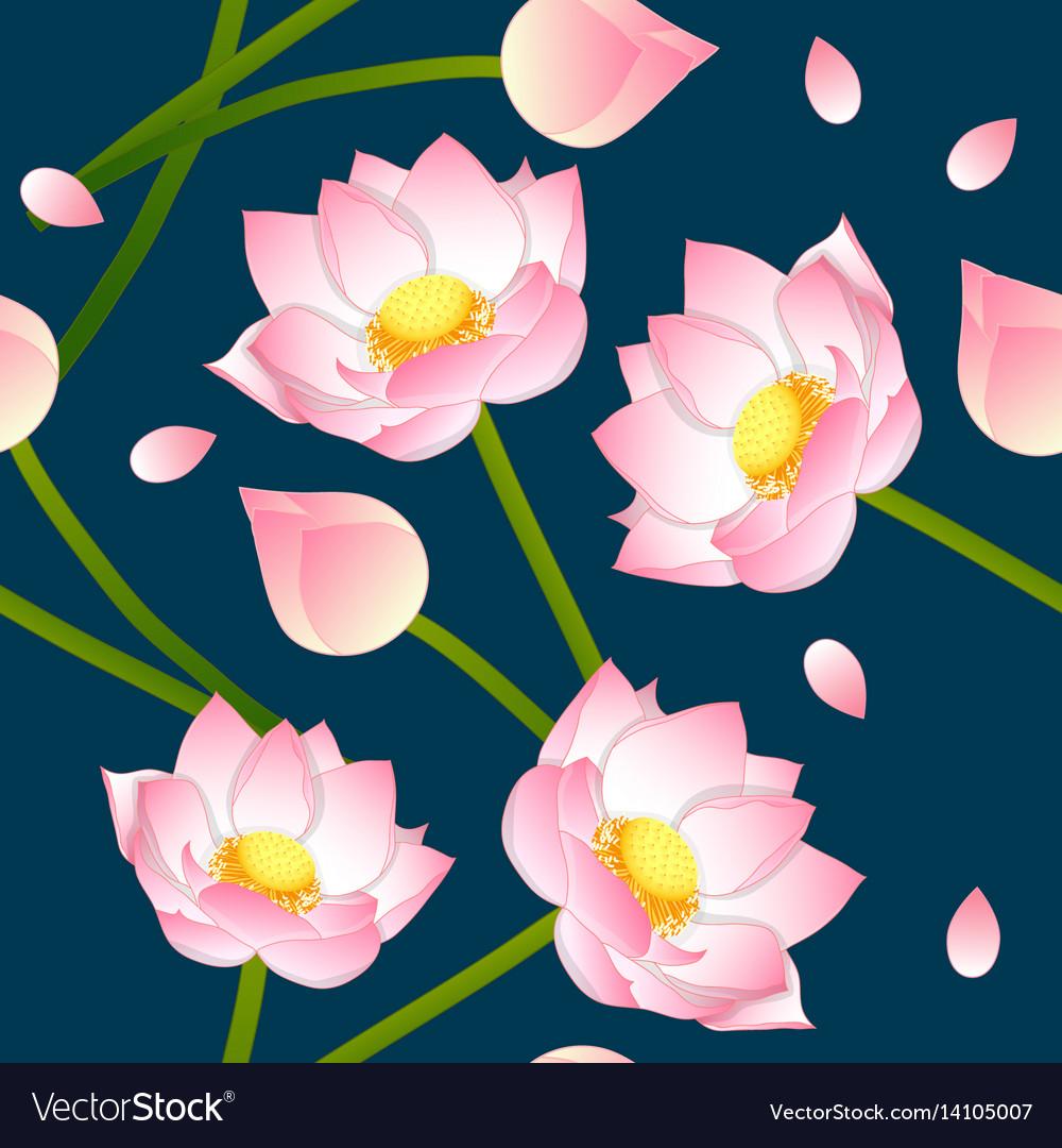 Pink Indian Lotus On Indigo Blue Background Vector Image