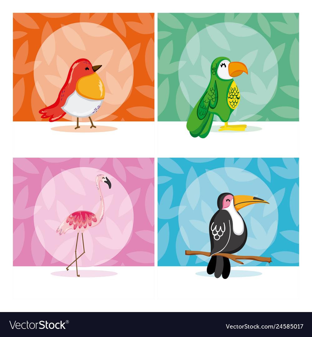 Set exotic birds
