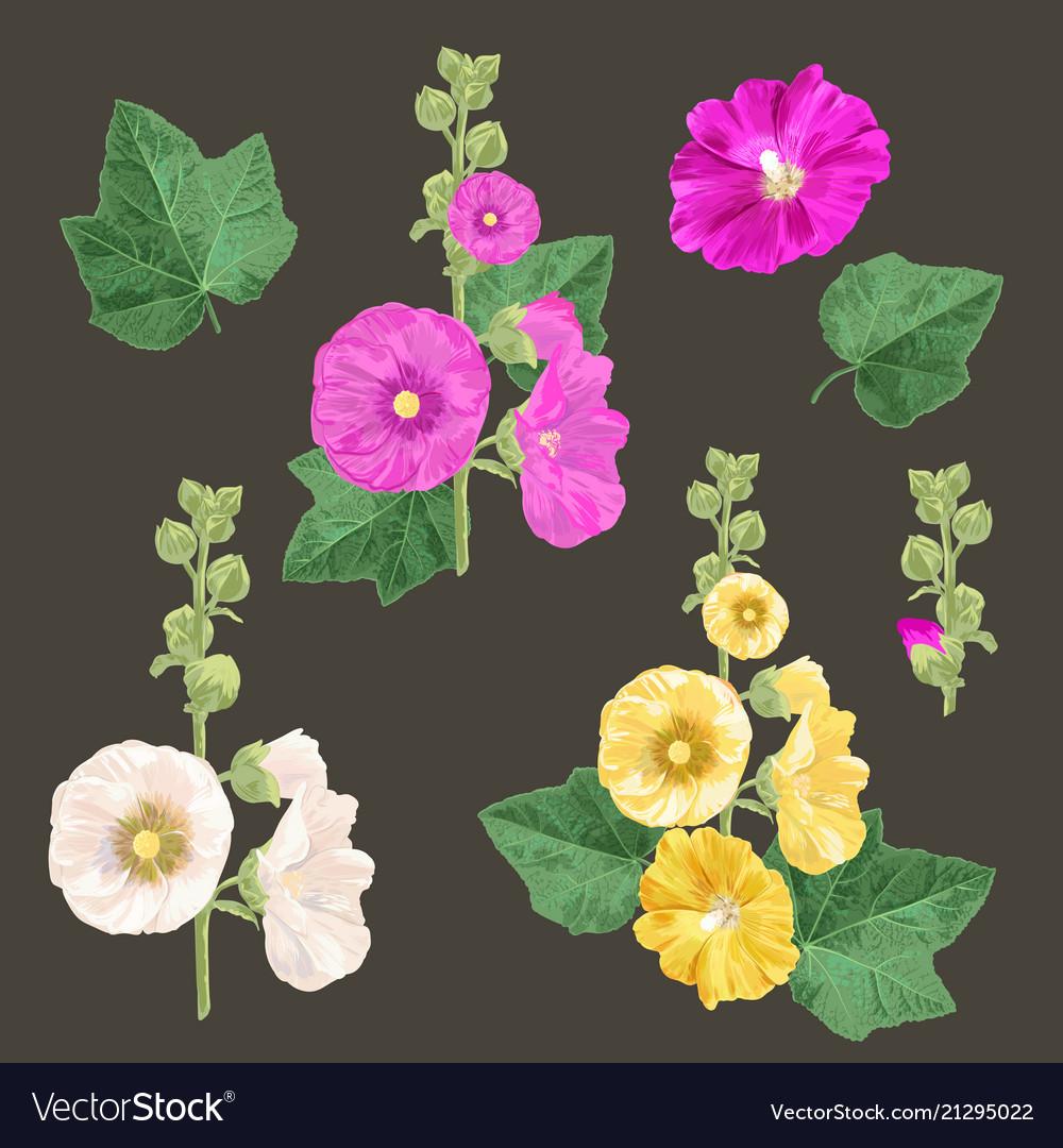 Malva flowers and leaves set summer floral design
