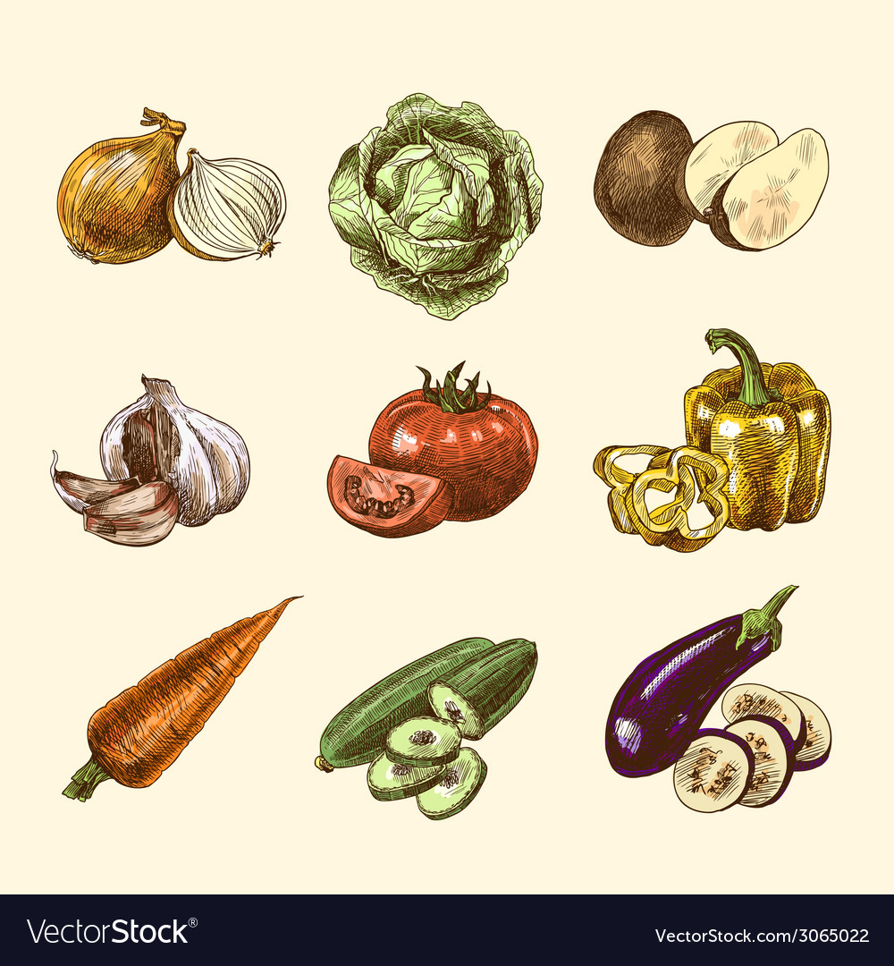Vegetables sketch set color vector image