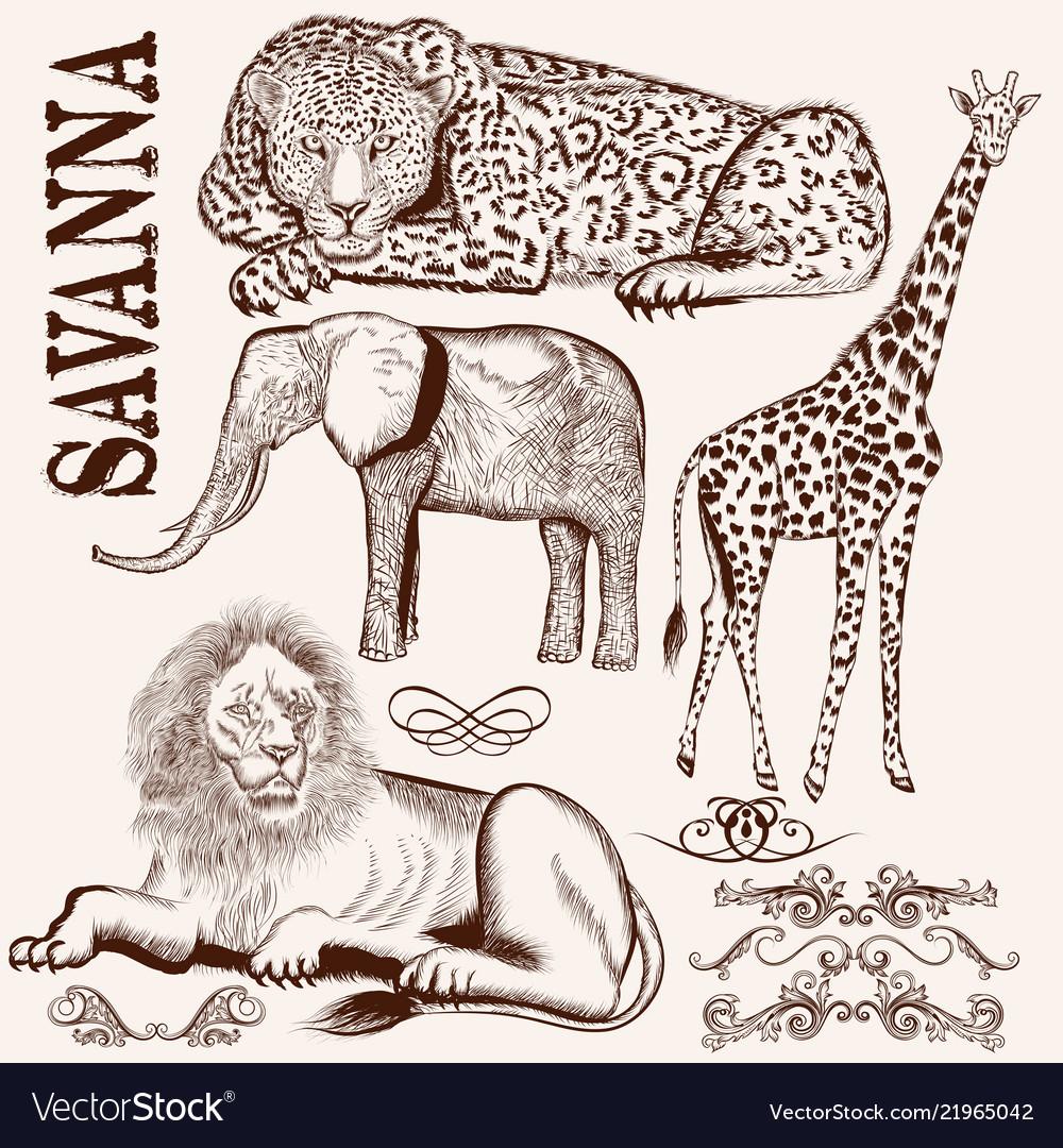 Collection of hand drawn savanna animals