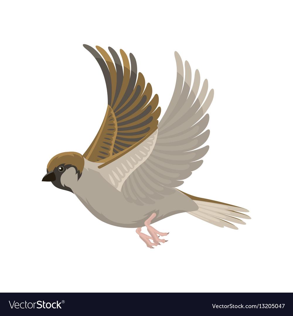 Sparrow flying bird Royalty Free Vector Image - VectorStock - photo#31