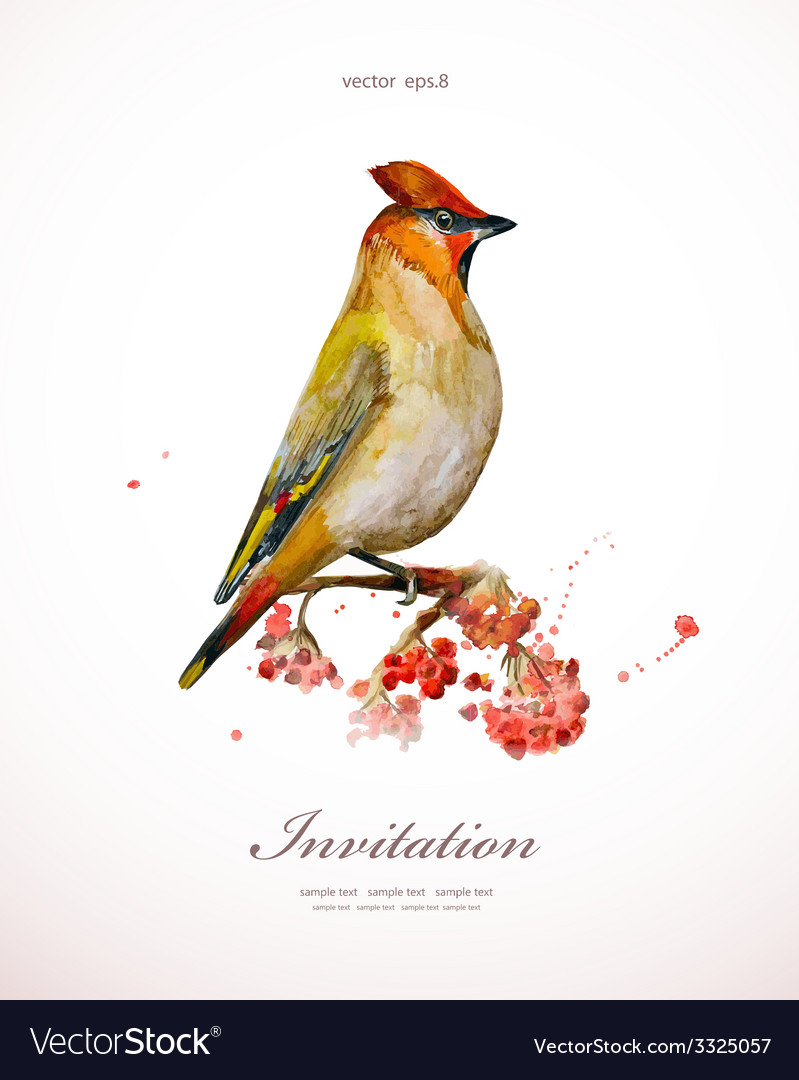 Watercolor painting wild bird at nature in