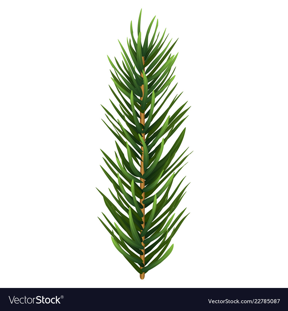 One Single Realistic Spruce Or Pine Branch Leaf Vector Image