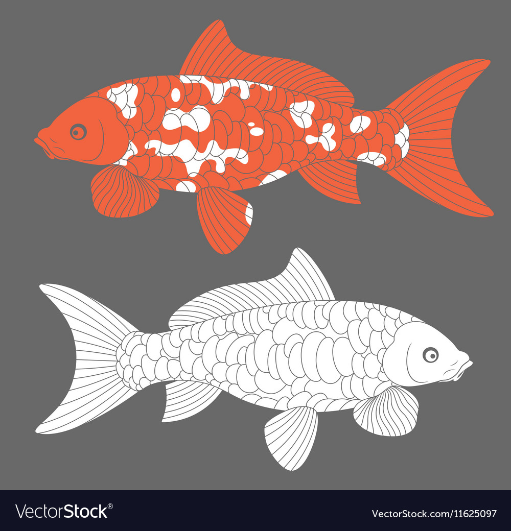 Koi Fish Carp Koi