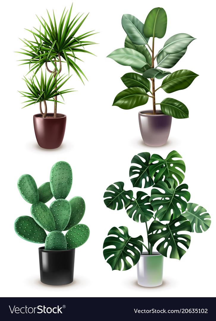 Realistic houseplant icon set