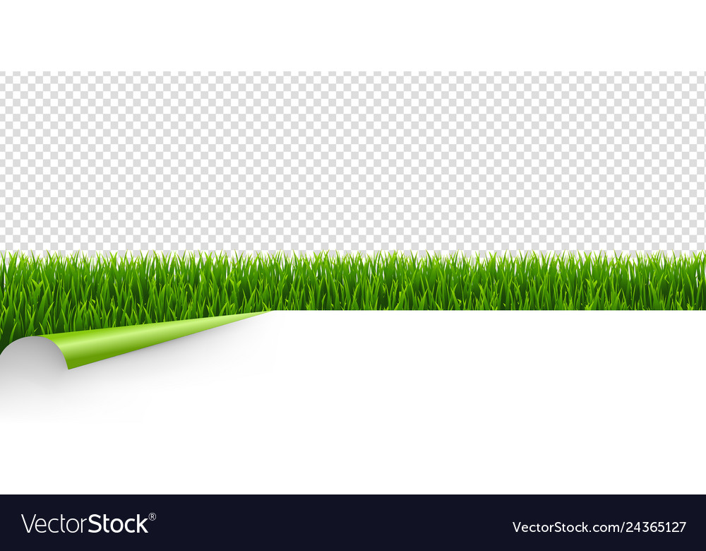 Green grass with green corner transparent vector