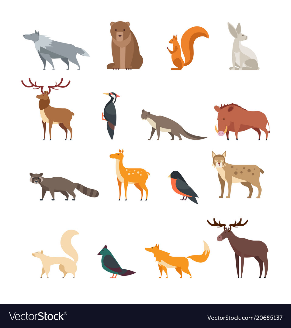 Forest wild animals and birds cartoon set vector image