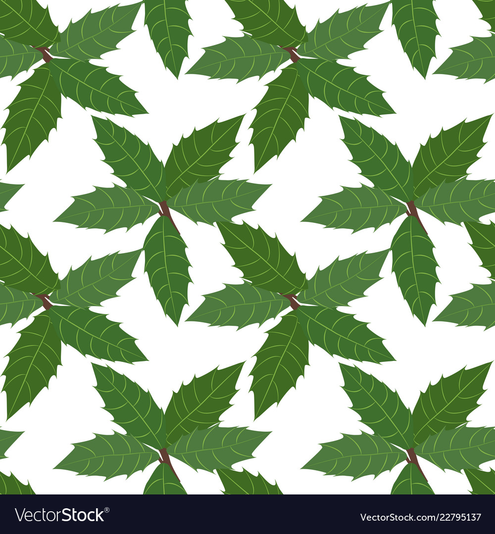 Green leaves of holly plant background seamless