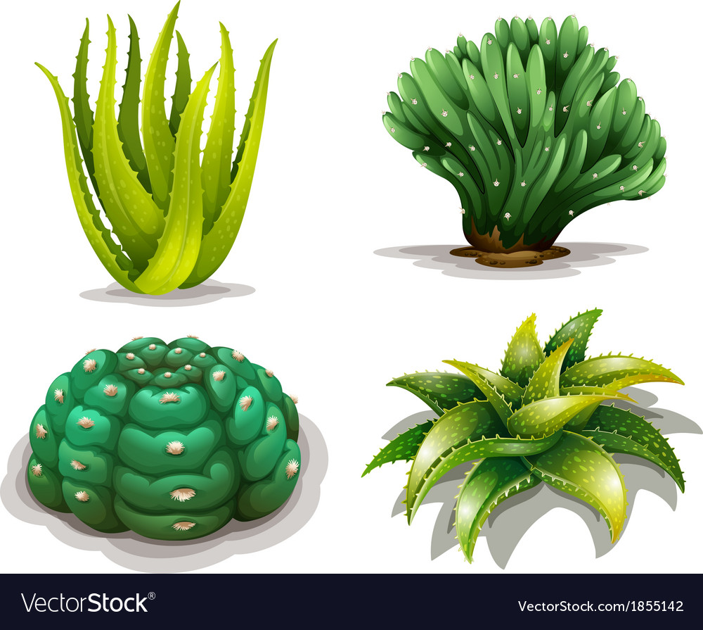 aloe vera plants and cacti royalty free vector image