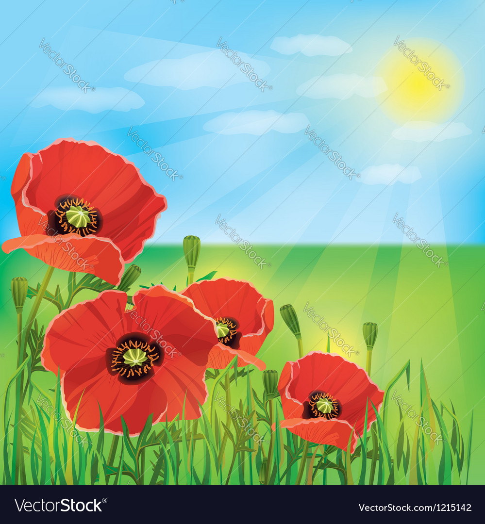 Nature background with flowers poppies vector image