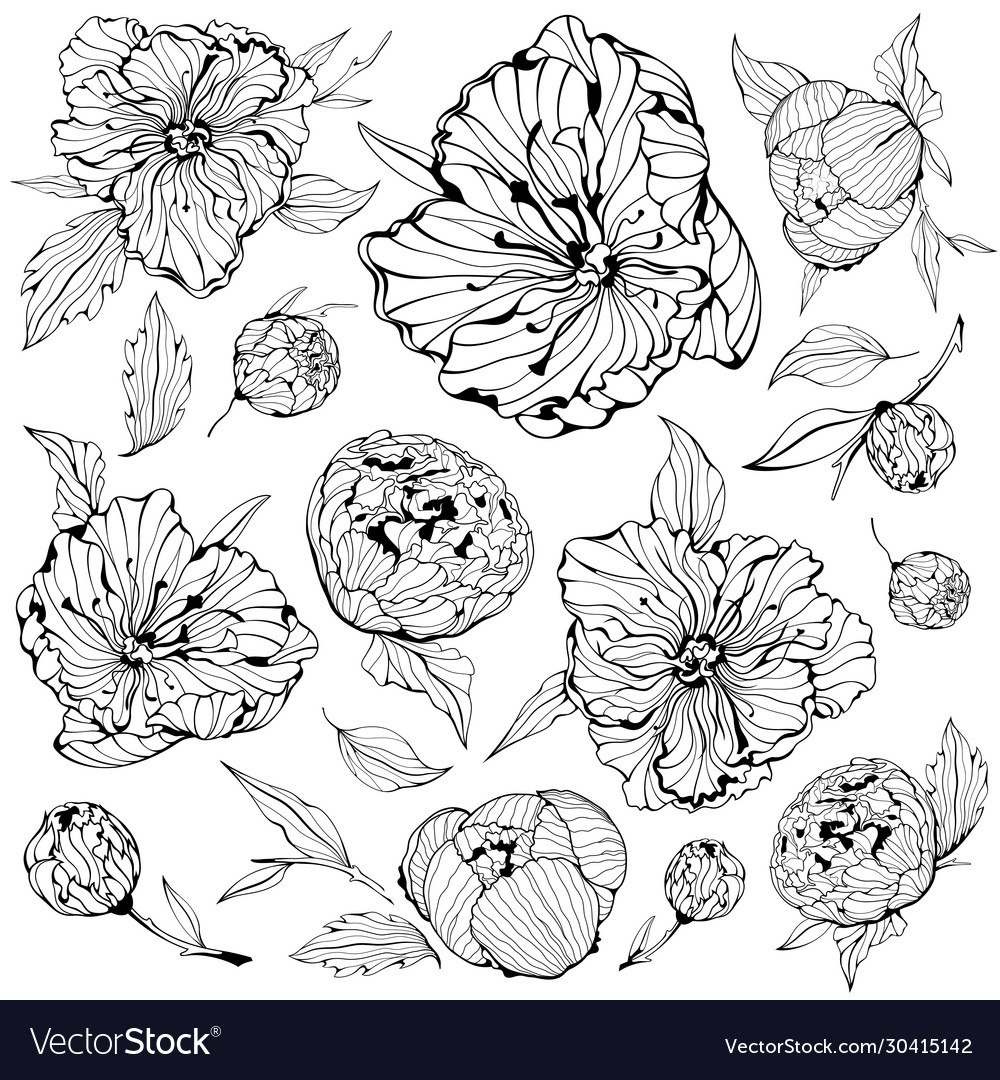Set isolated peony flowers