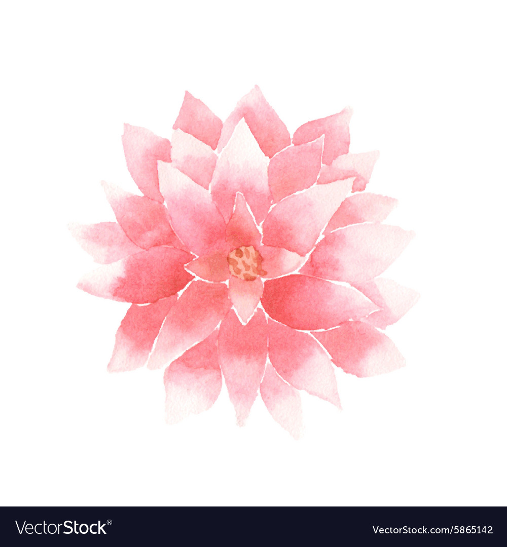 Watercolor Lotus Flower Pink Royalty Free Vector Image