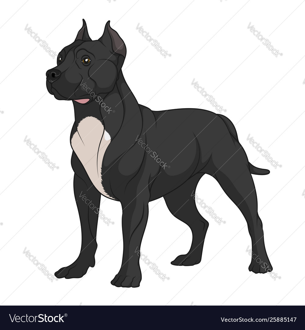 Color a black pit bull with white vector