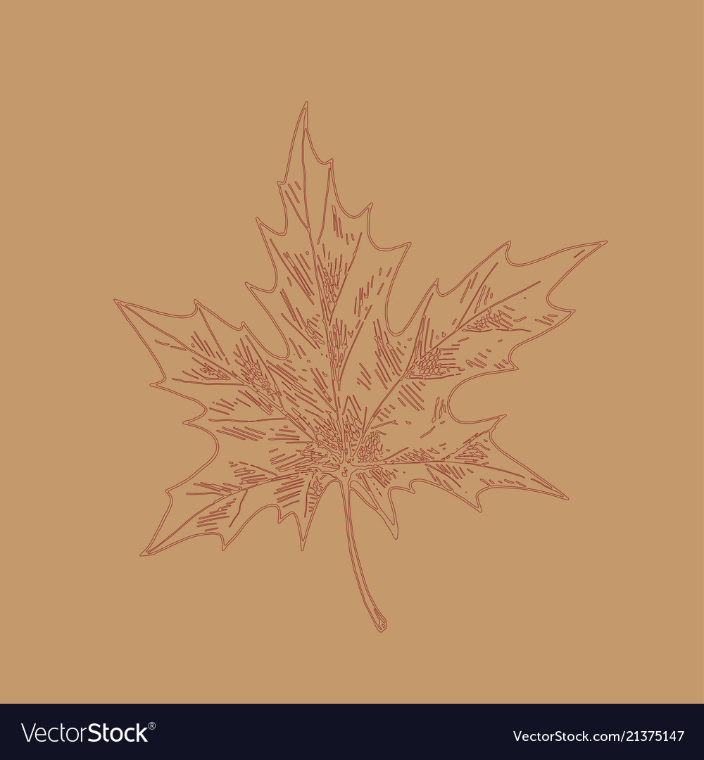 Hand drawn maple leaf outline maple leaf in line