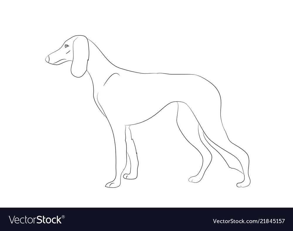 Dog stands lines