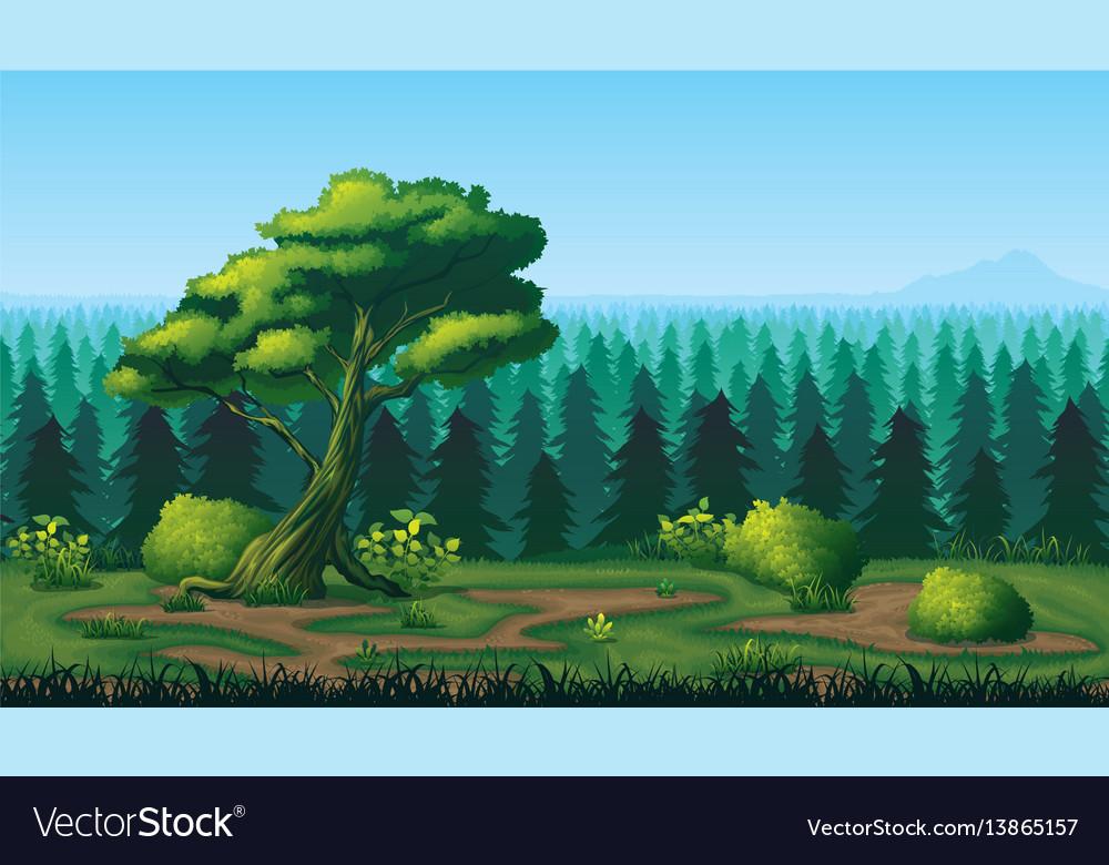 Seamless background of landscape with deep fir