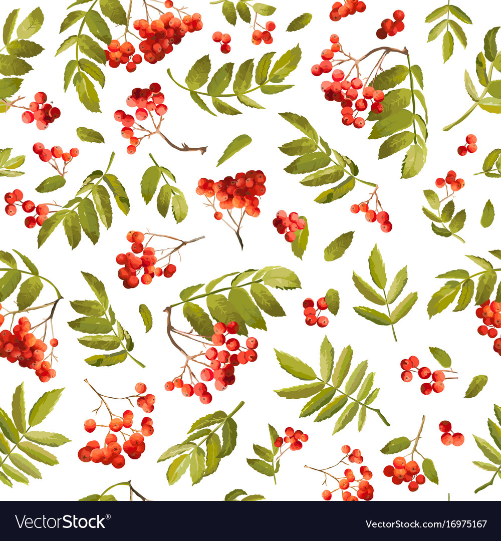 Autumn rowan berry seamless background vector image