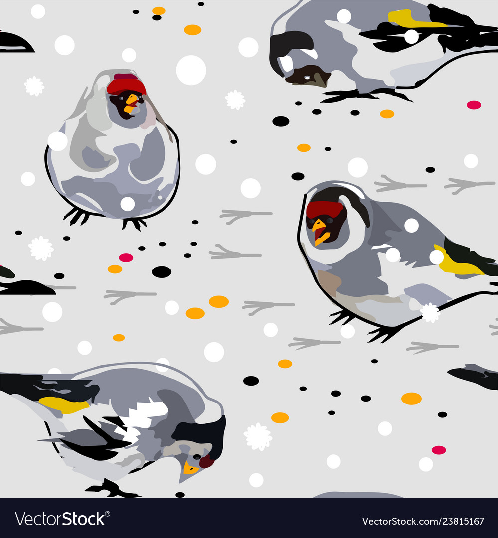 Birds goldfinch on the snow