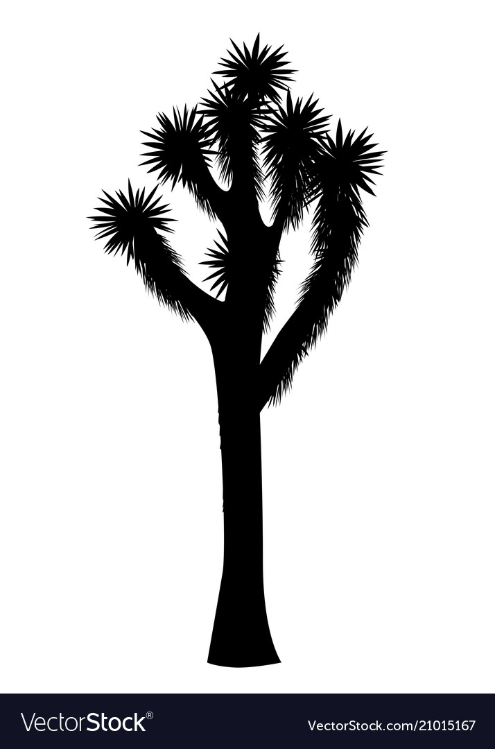 Joshua tree isolated on white background