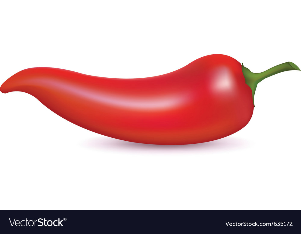 red hot chili pepper royalty free vector image rh vectorstock com chili pepper vector pattern chili pepper vector illustrator