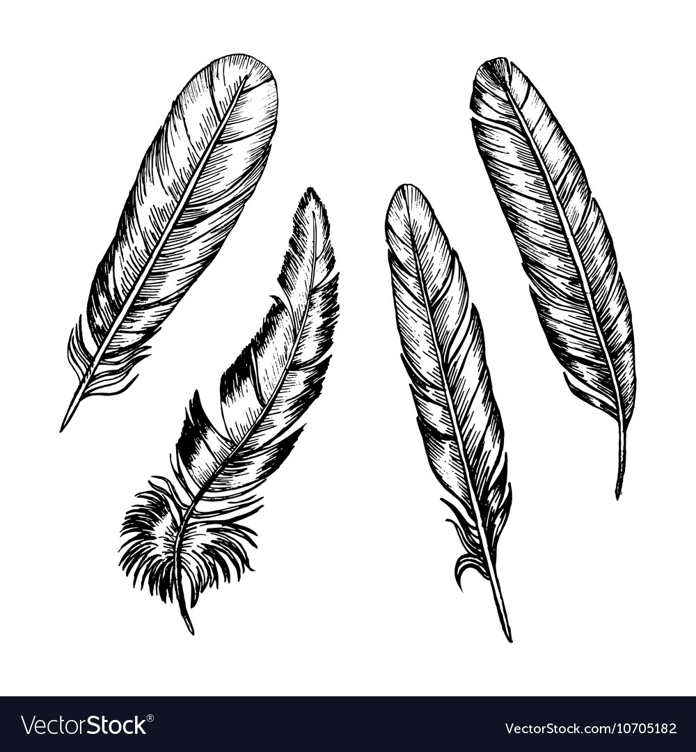Feathers Set Hand Draw Sketch