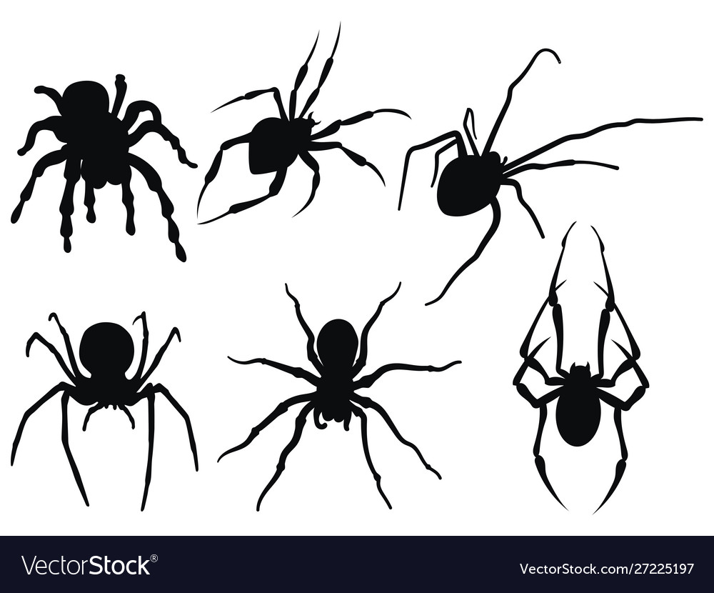 Set spiders collection black and white