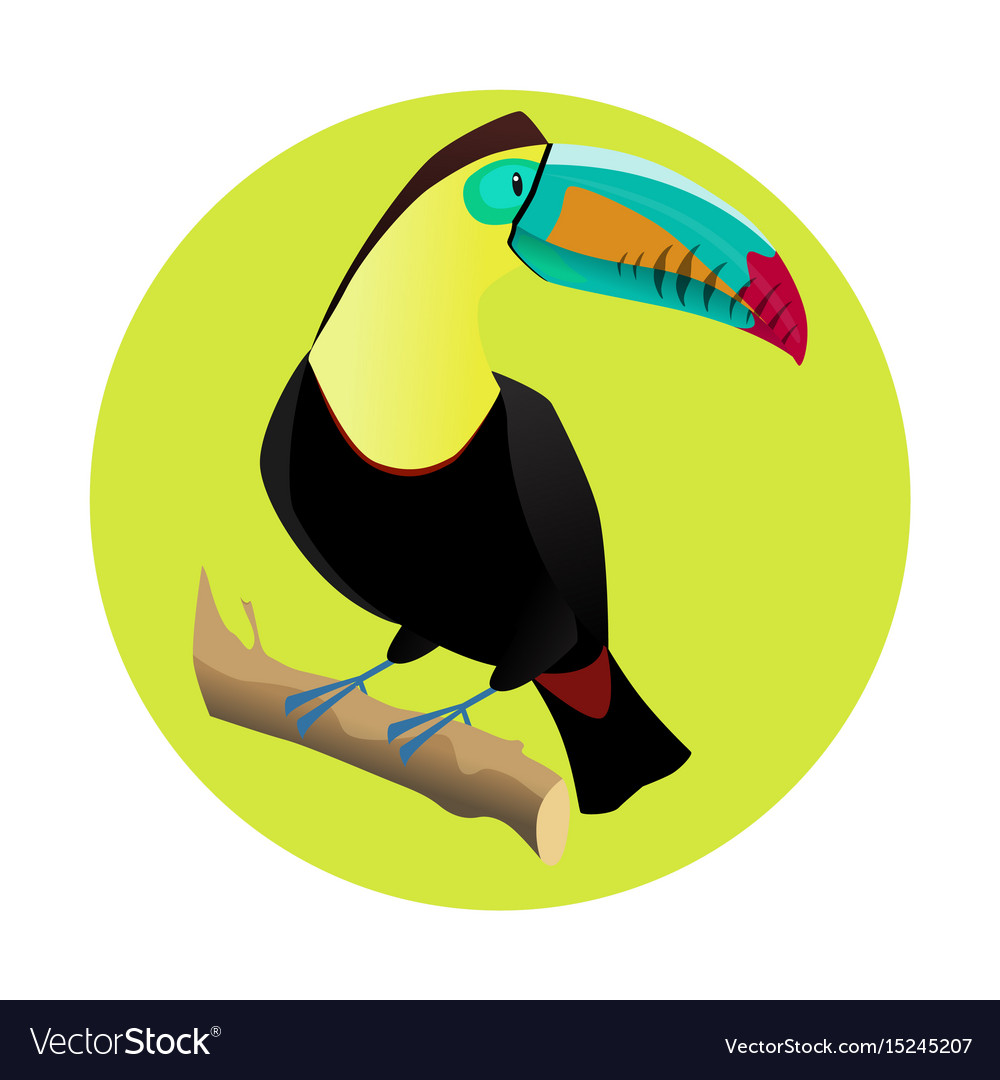 Big bright toucan tropical bird