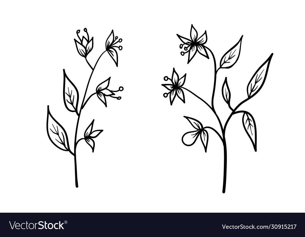 Flowers hand drawn sketch floral art