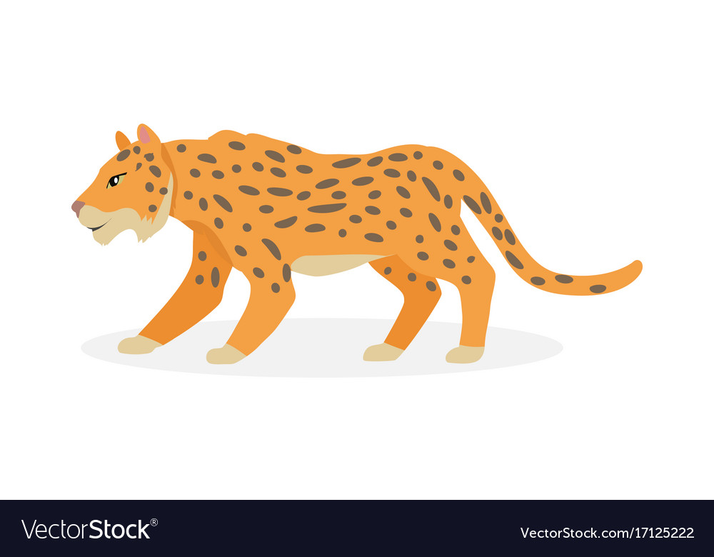 Jaguar wild cat panther isolated on white vector image