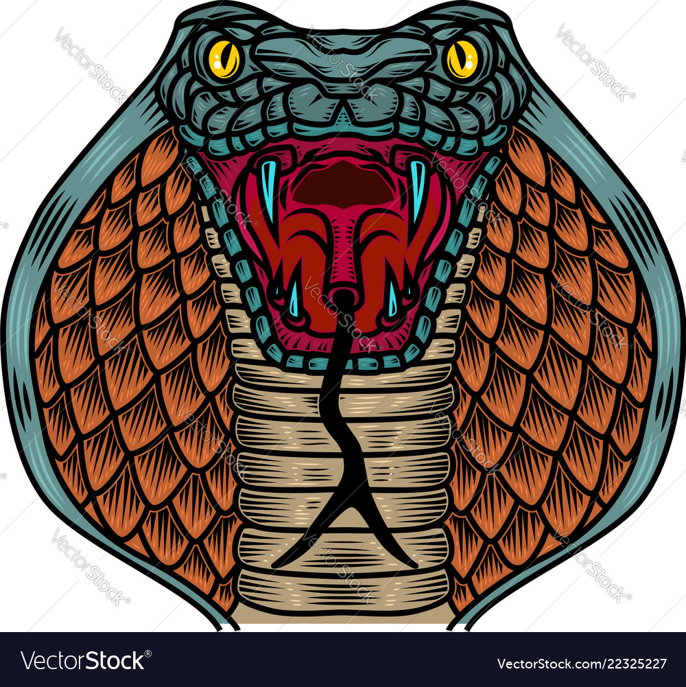 Cobra snake in old school tattoo style design