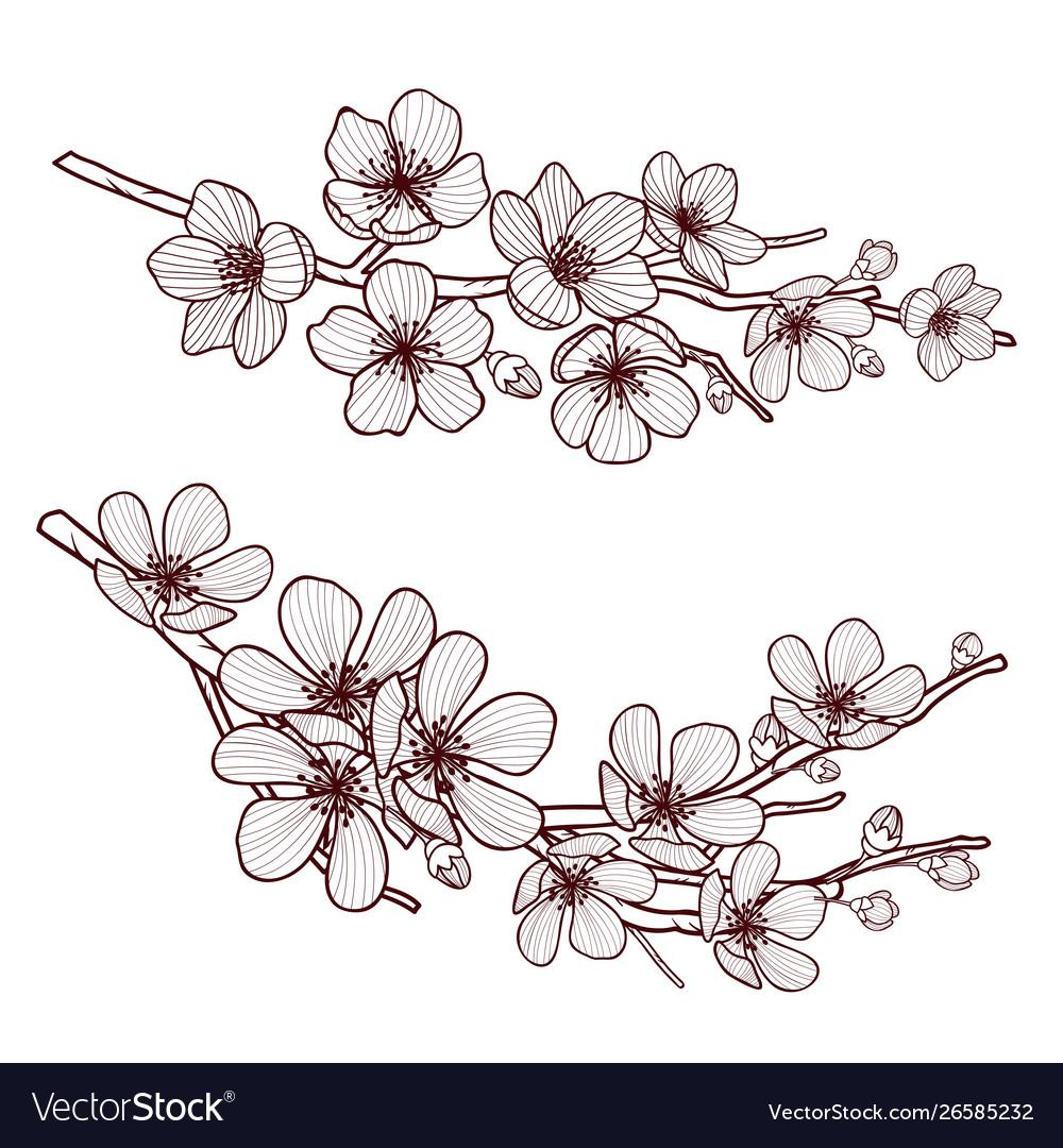 Set beautiful cherry tree flowers isolated on