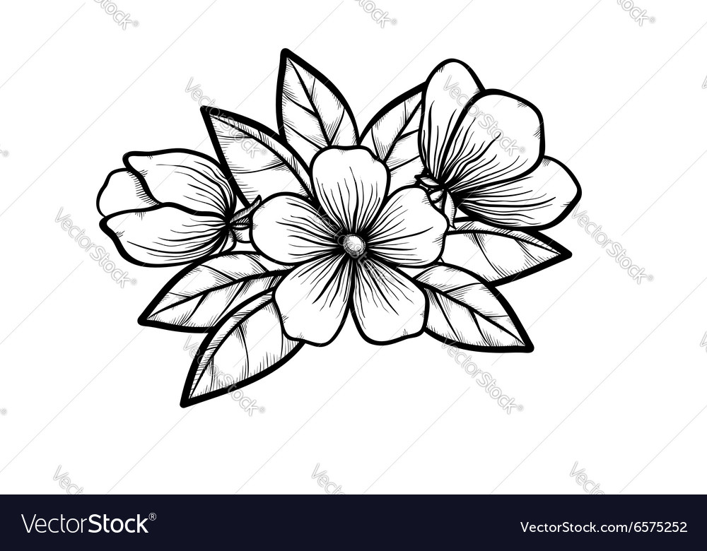 Branch of a blossoming tree in graphic black white