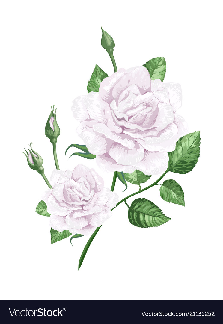 White rose on stem in watercolor style and