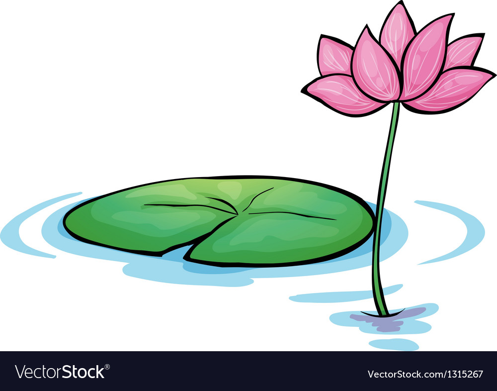 A waterlily flower