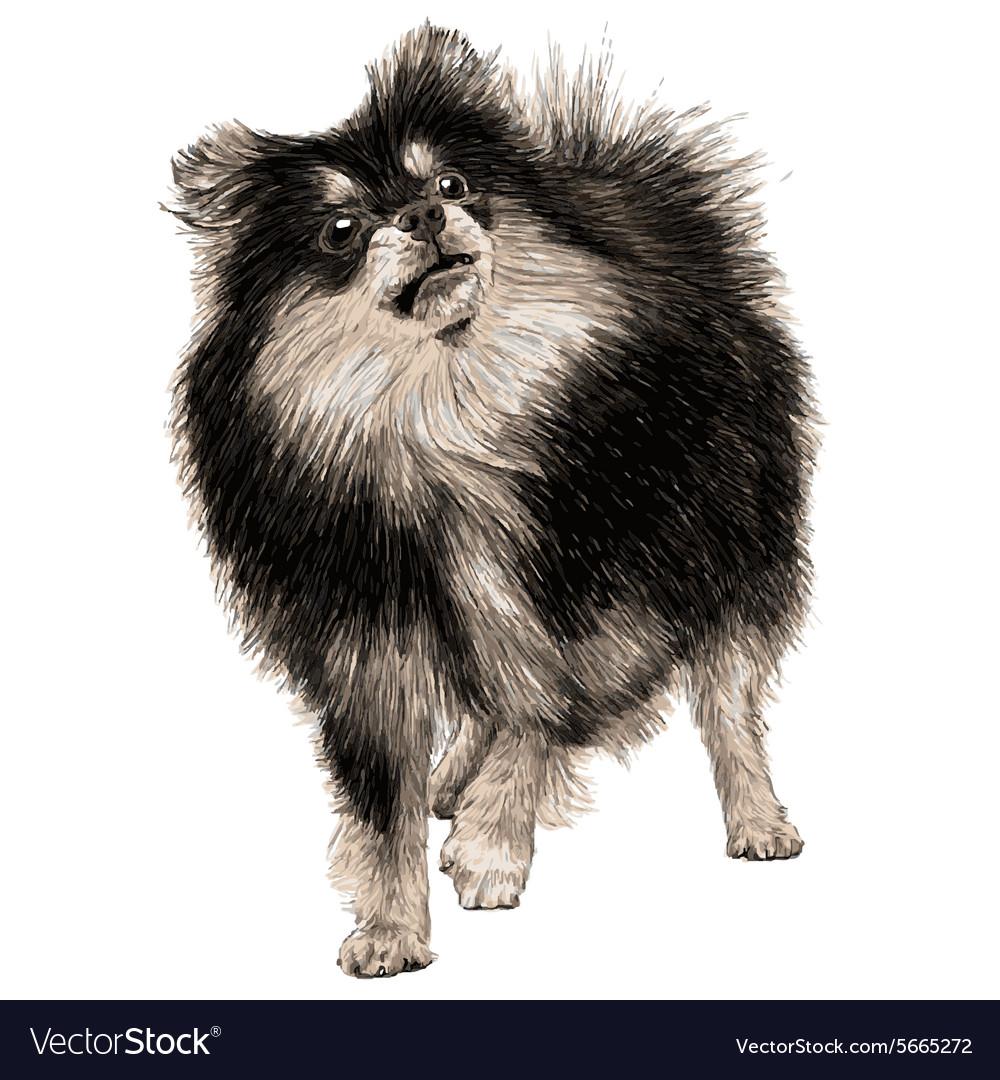 Dog 09