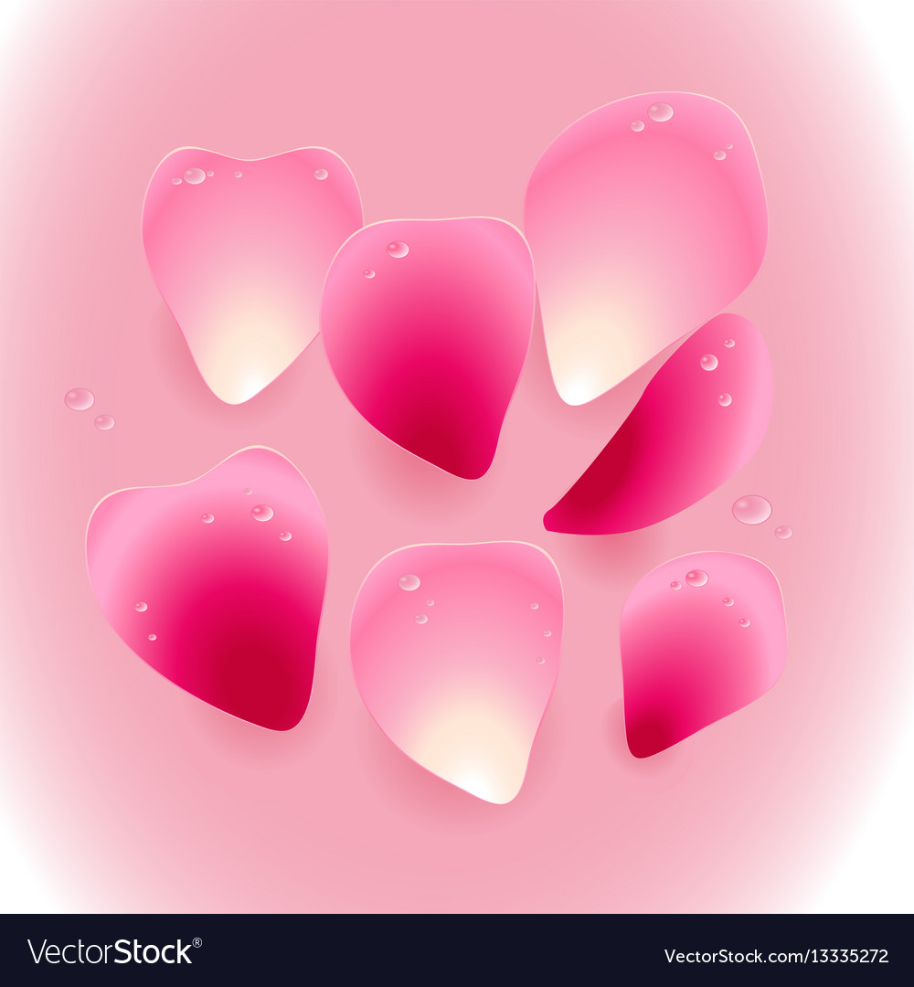 Pink rose petals with drops of water