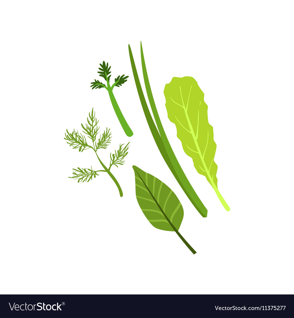 Herbs Product Rich In Folic Acid vector image