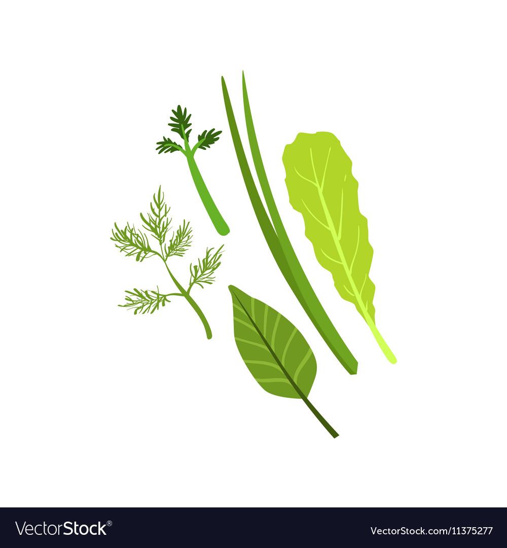 Herbs Product Rich In Folic Acid
