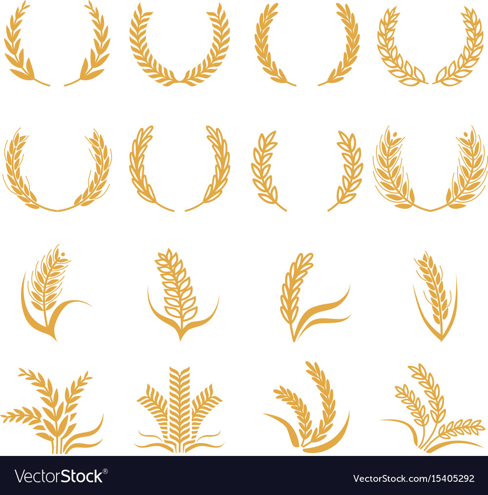 Silhouette of wheat corn symbols isolated Vector Image