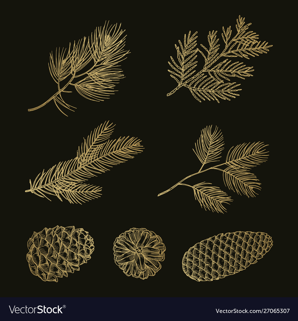 Gold fir branches and cones doodle set