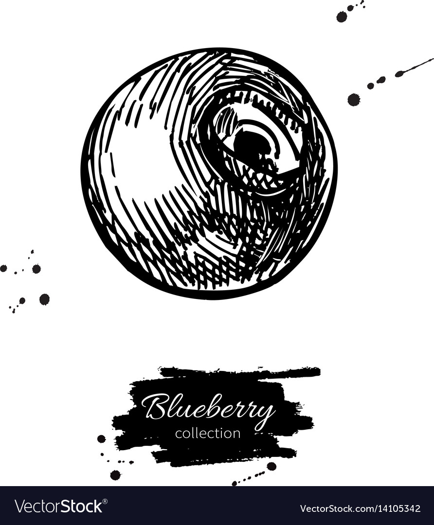 Blueberry drawing isolated hand drawn