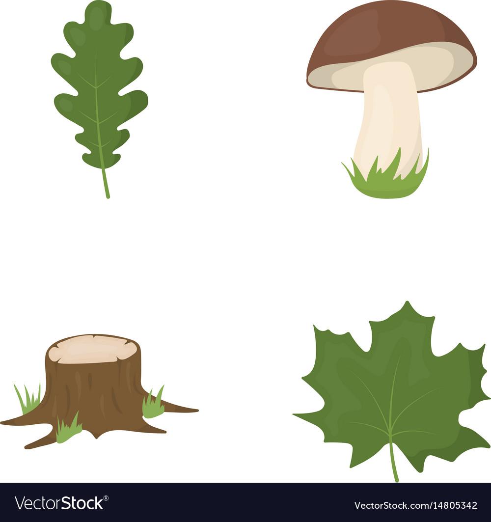 Oak leaf mushroom stump maple leafforest set vector image