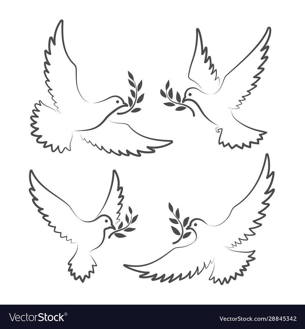 White doves with olive branch